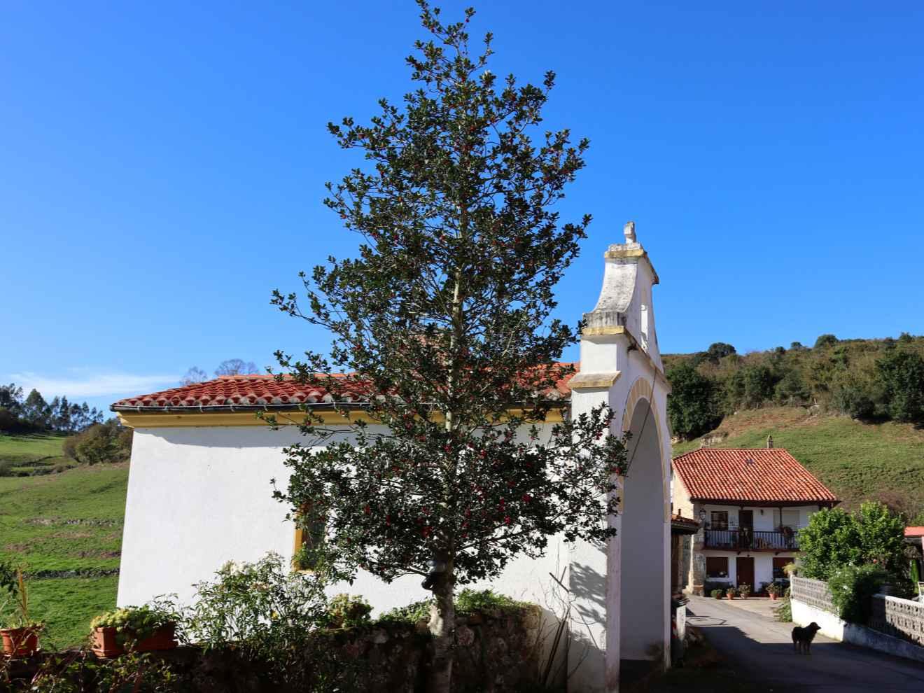 Ermita del Rosario y acebo en Duña