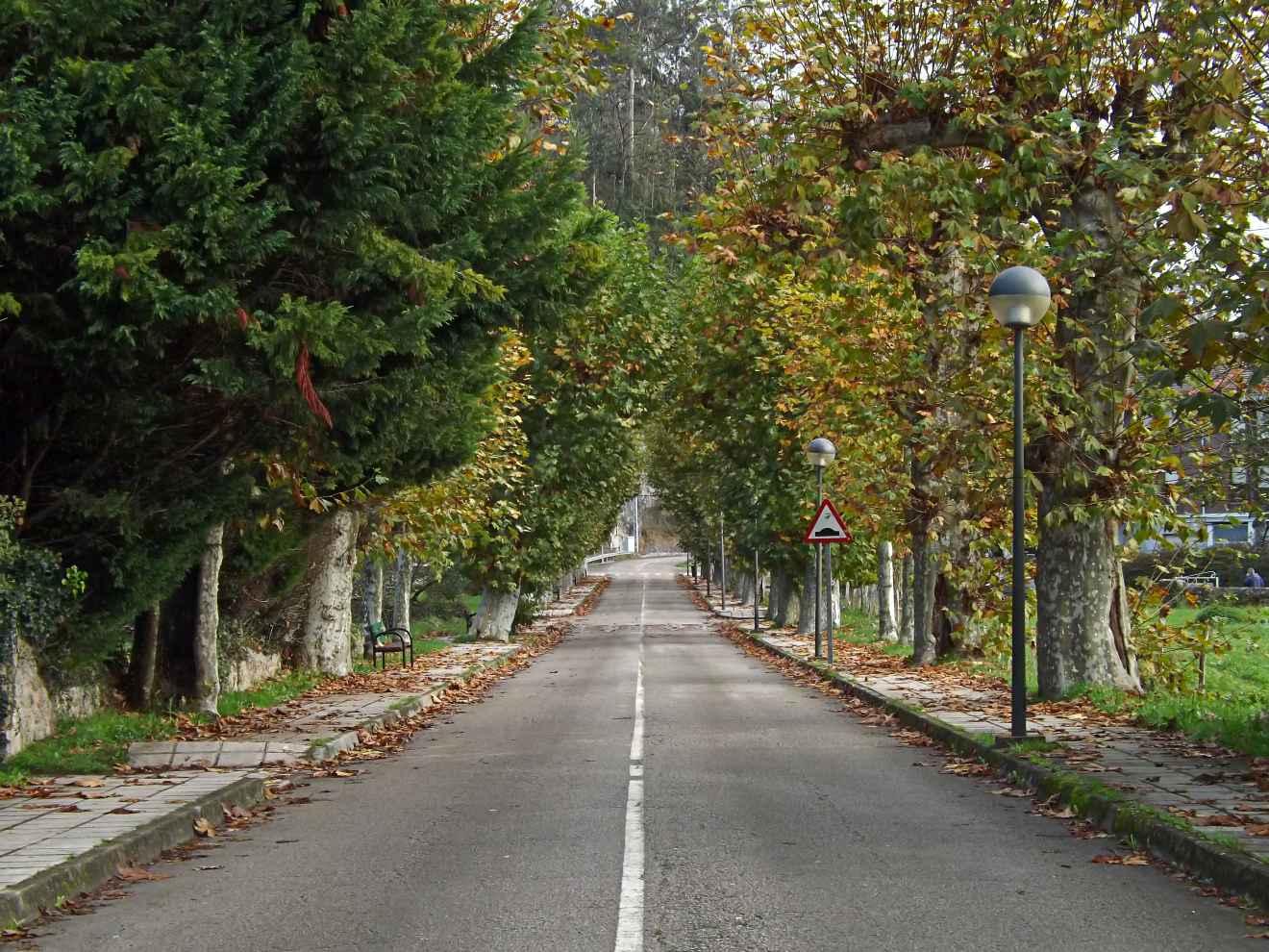 Carretera arbolada en Casar