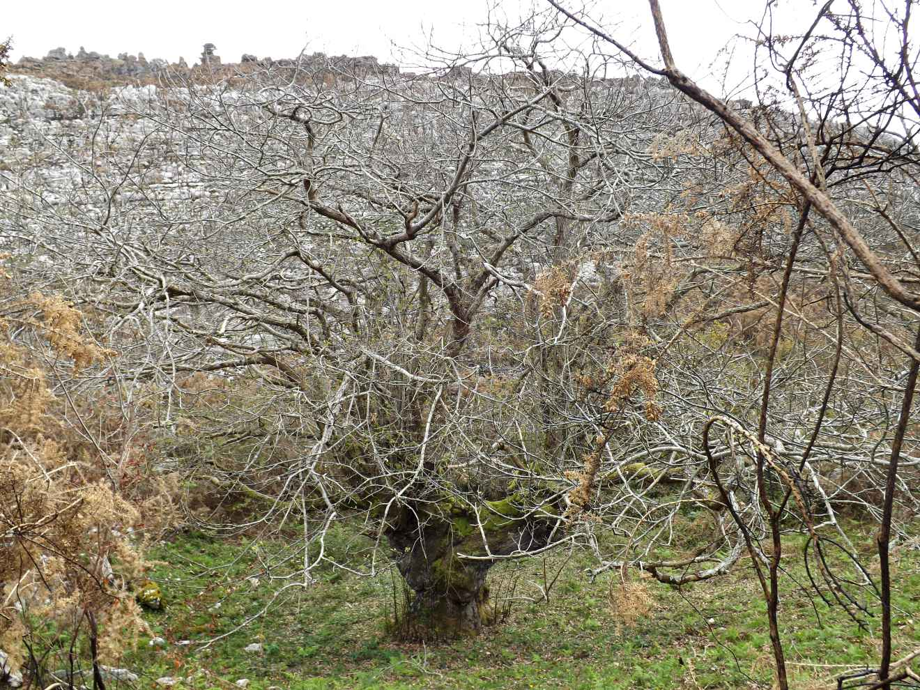 Monte de los Coborros
