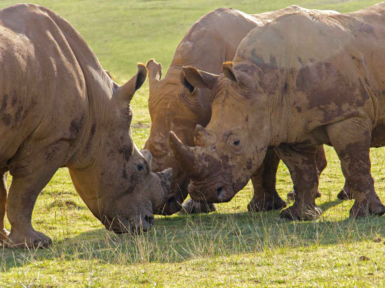 Rinocerontes en el parque de Cabárceno