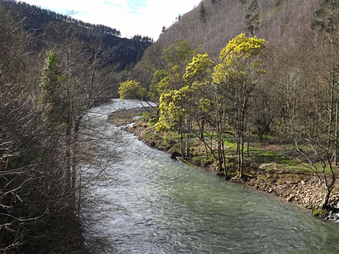 Río Saja a su paso por Santa Lucía