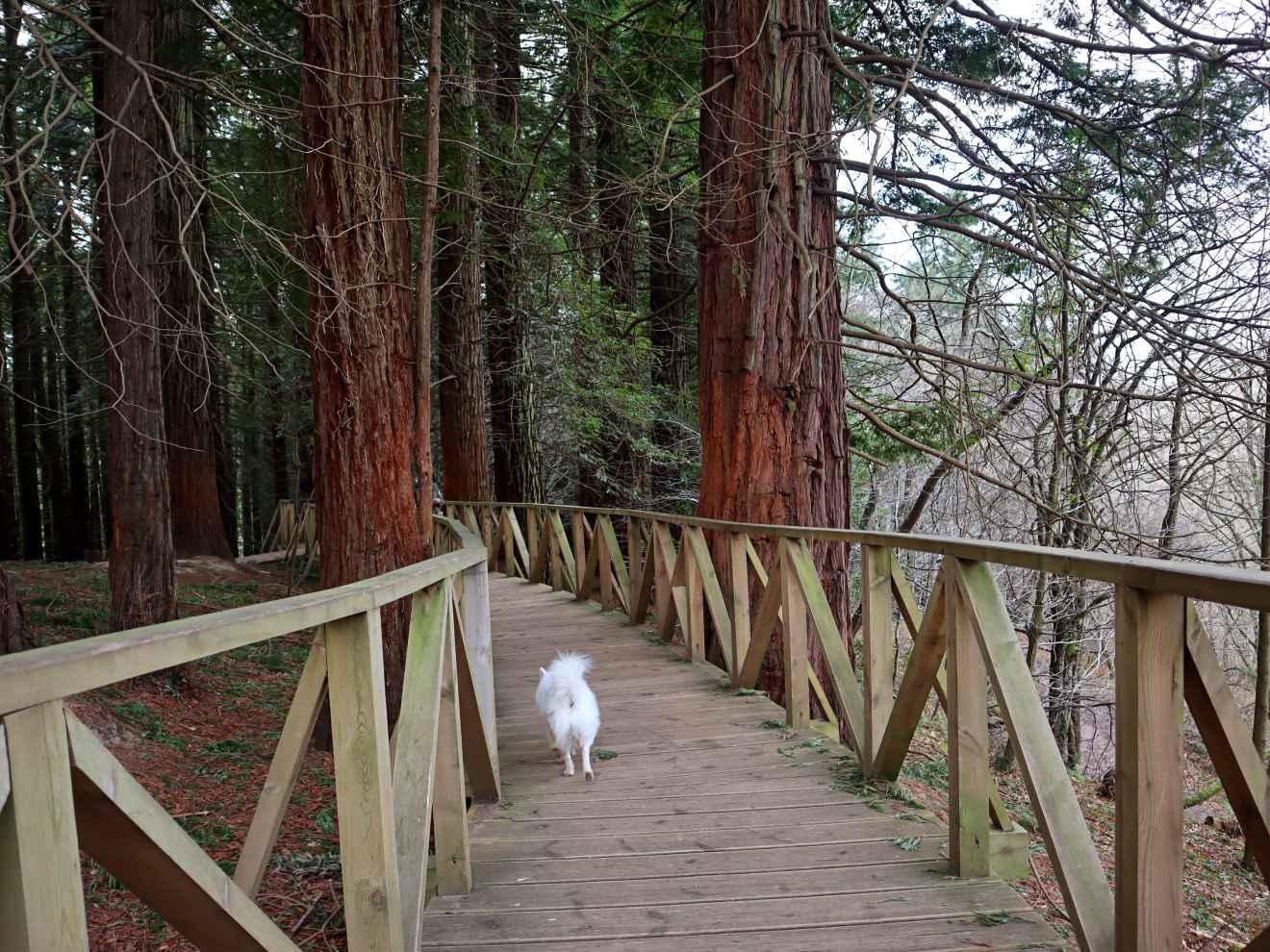 Pasarela del Bosque de Secuoyas