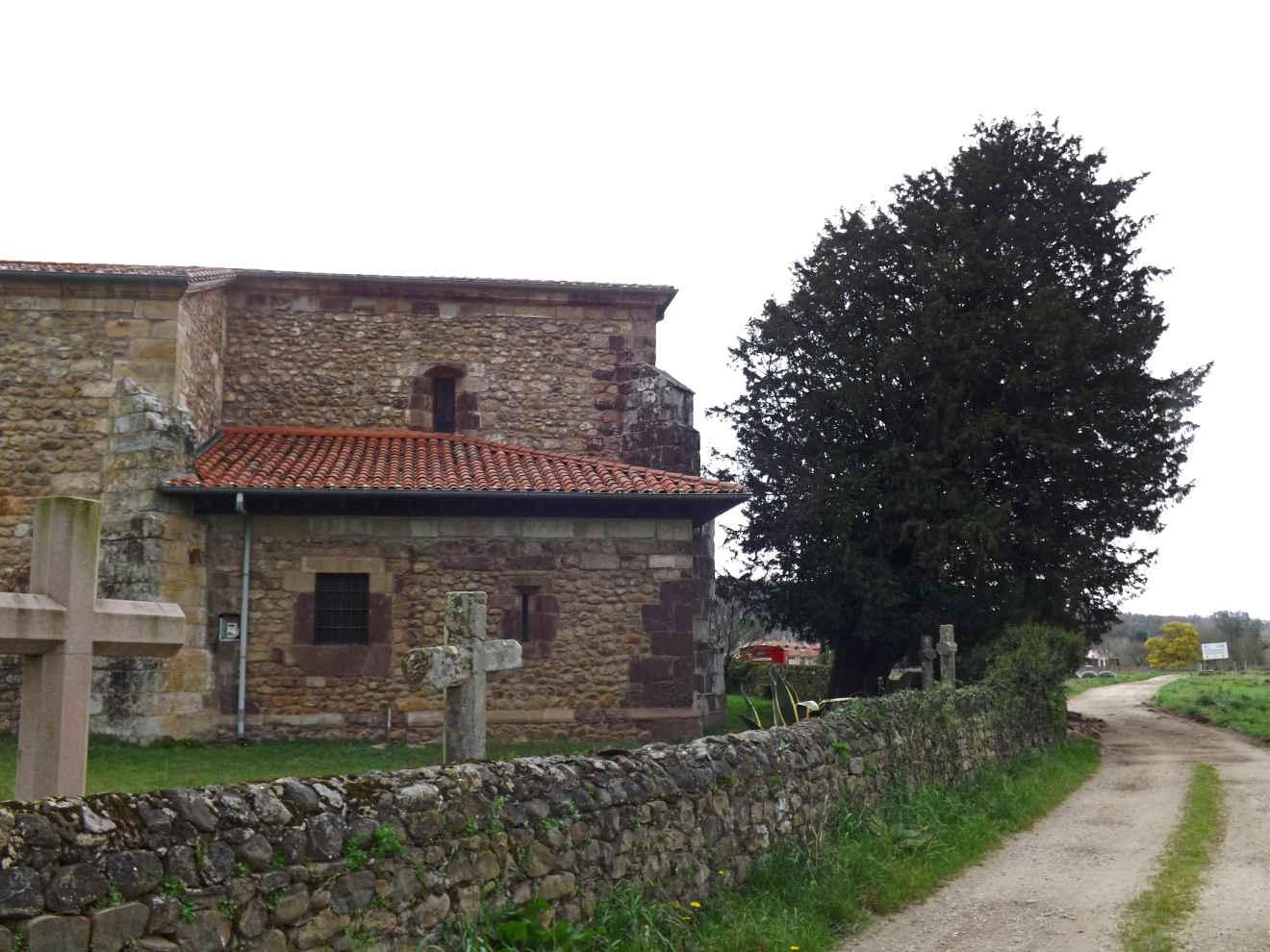 Tejo al lado de la iglesia de San Lorenzo de Periedo